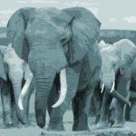 Führungspsychologie: Motiv, Motivation und Volition